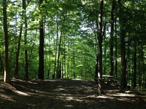 Mohican Adventures Campsites In Loudonville Oh In The